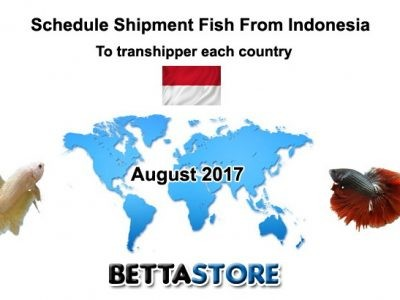 Aug 2017 schedule shipment fish from Indonesia