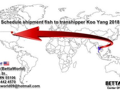 Schedule ship fish from Thailand to transhipper Koo Yang in MN