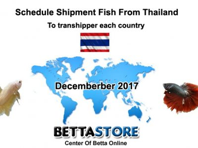 Dec 2017 Schedule Shipment Fish From Thailand