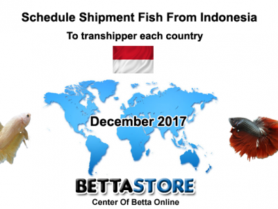 Dec 2017 Schedule Shipment Fish From Indonesia