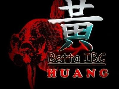 Betta Ibc Huang – Indonesia Seller