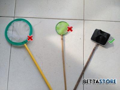 Betta net – Betta Scoop