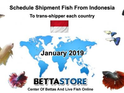 Schedule ship fish from Indonesia on January 2019