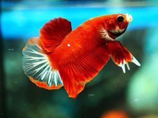 Super Nemo HMPK #B005