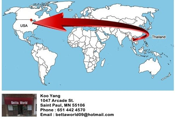 Schedule ship fish from Thailand to Koo Yang in MN, USA. 2019