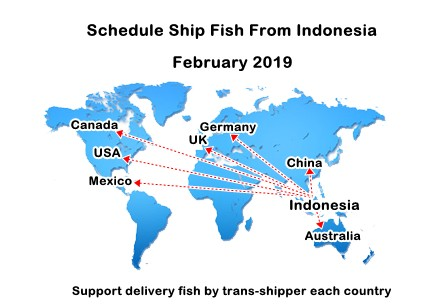 Schedule ship fish from Indonesia on February 2019