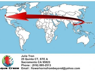 Schedule ship fish from Thailand to Julie Tran in CA, USA. 2019