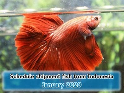 Schedule ship fish from Indonesia onJanuary 2020