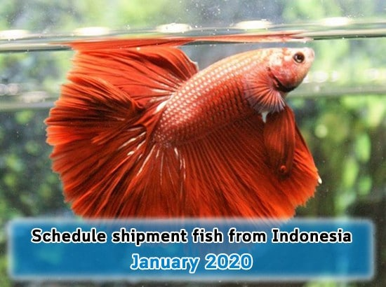 Schedule ship fish from Indonesia on January 2020