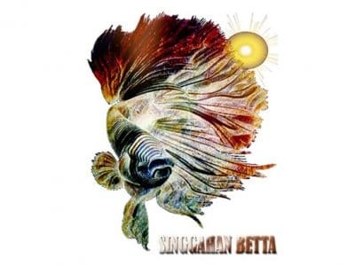 Singgahan Betta – Indonesia Betta Seller