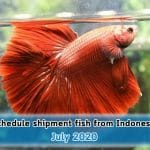 Schedule ship fish from Indonesia on July 2020