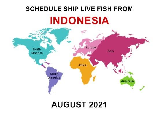 send fish